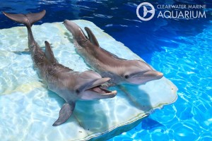 Aquarium Fintastic Friends
